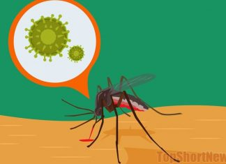 Why the mosquitoes can't carry coronavirus and HIV infection?