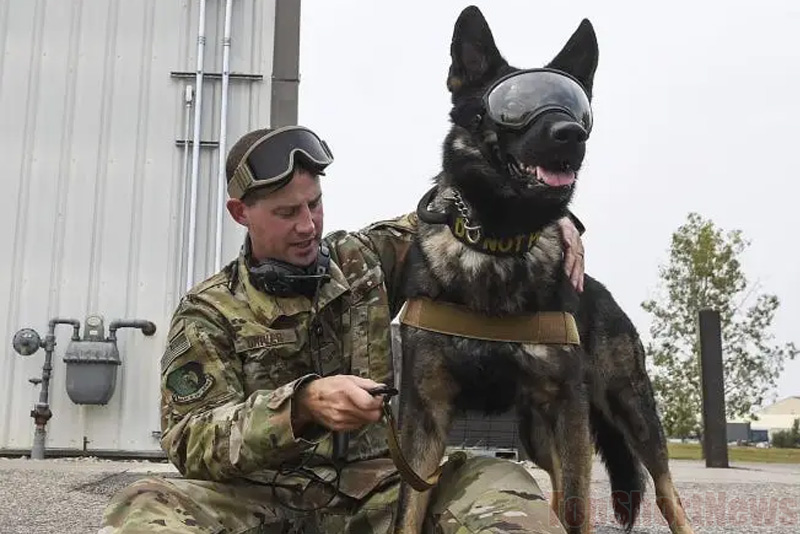 US Army Dogs will have AR-goggles